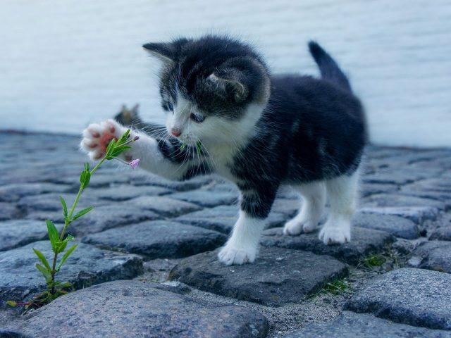 cat-2536662_1280
