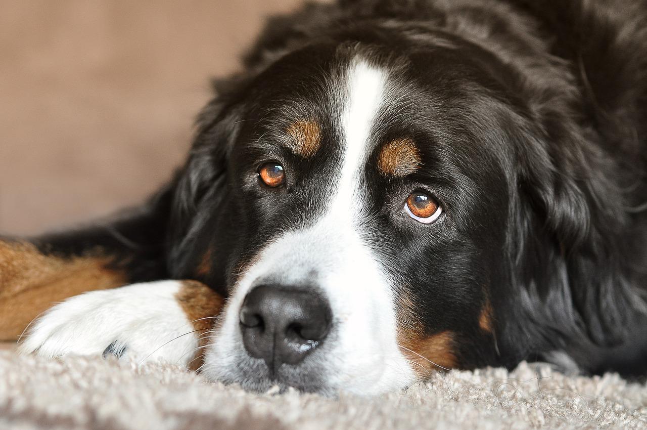 dog-2668993_1280