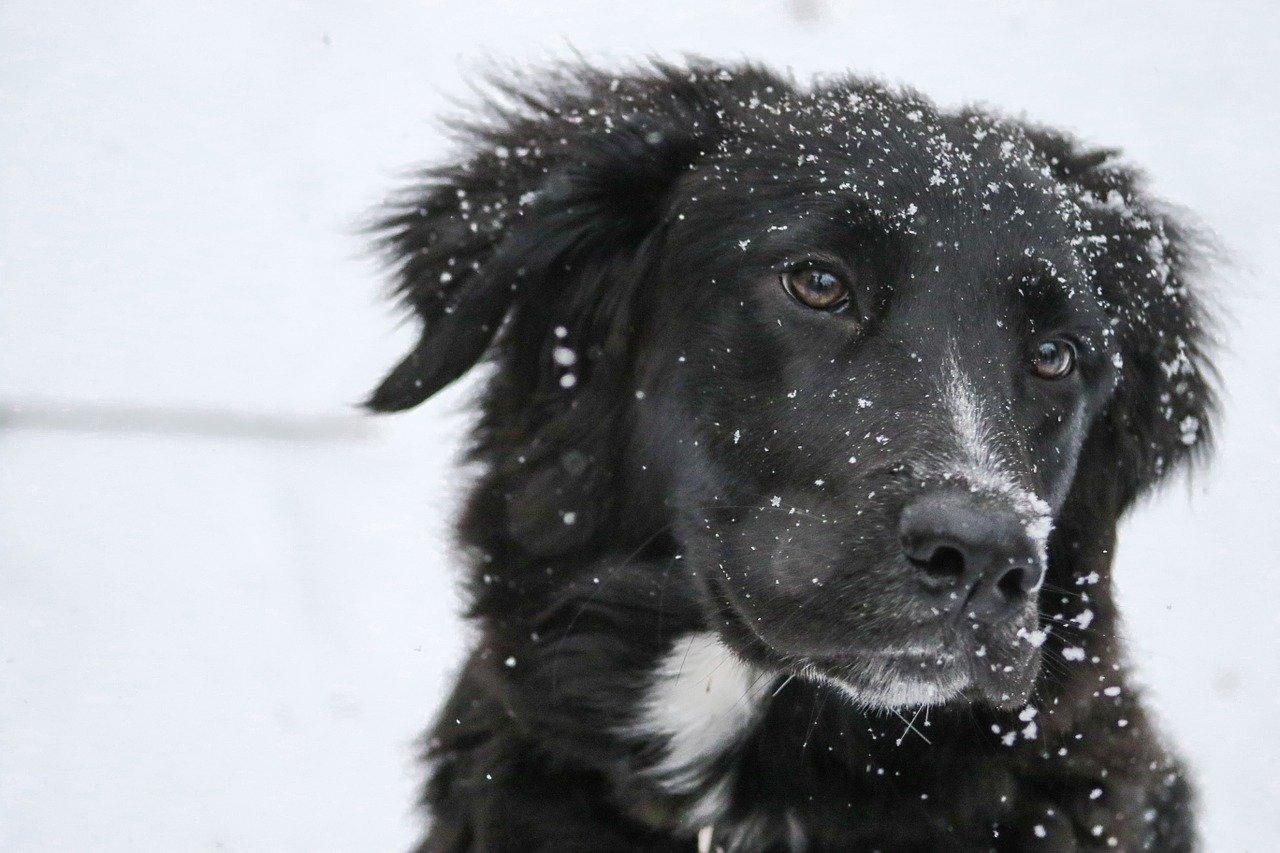 snowflakes-1149417_1280